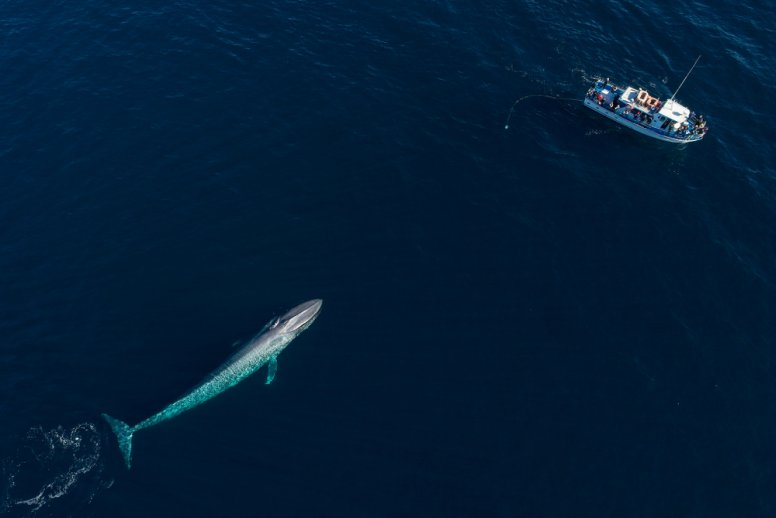 blue whale, shape of a submarine