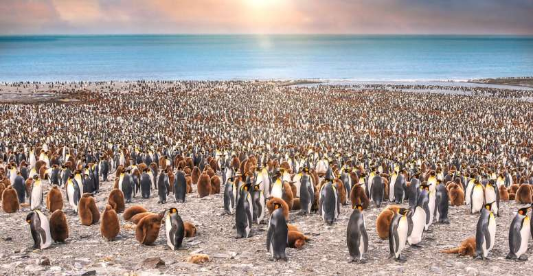 large penguin colony