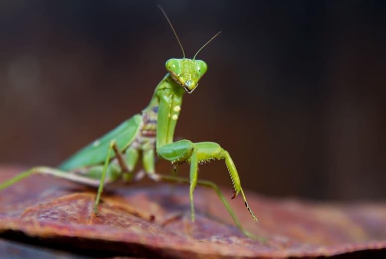 Praying Mantis legs